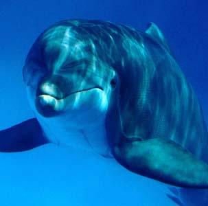 Такое поведение морских